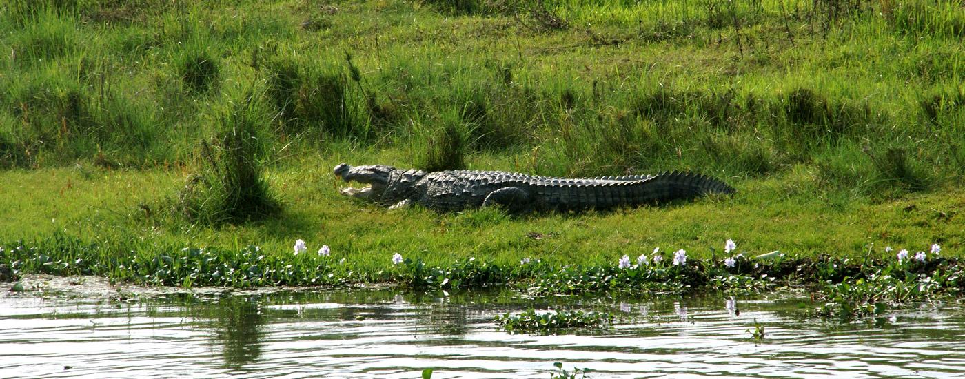 Chitwan National Park Wildlife Safari