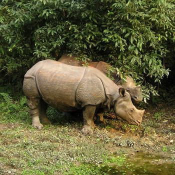 Chitwan National Park Nepal